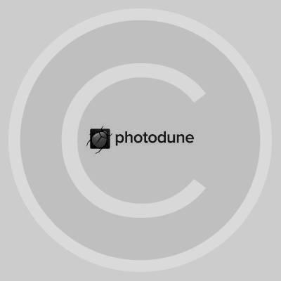 photodune-square.jpg